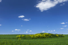 Grünes Feld mit blauem Himmel Stockfoto