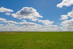 Grünes Feld mit blauem Himmel Lizenzfreies Stockbild
