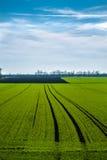 Grünes Feld mit blauem Himmel Lizenzfreie Stockbilder