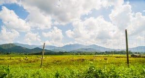 Grünes Feld mit blauem Himmel und Wolke Lizenzfreie Stockfotos