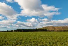 Grünes Feld mit blauem Himmel und Wolken Stockfotos