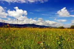 Grünes Feld mit Blumen in den Bergen Lizenzfreie Stockfotografie