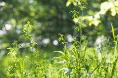 Grünes Feld mit Blumen, grüne Beschaffenheit oder Hintergrund stockbild