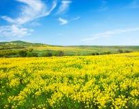 Grünes Feld mit Blumen unter blauem bewölktem Himmel stockbild