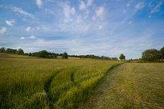 Grünes Feld mit dem blauen Himmel Stockfotografie