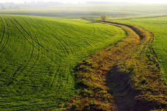 Grünes Feld mit dem Kanal und dem einsamen Baum Stockfotografie