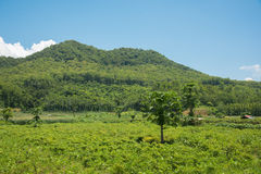 Grünes Feld mit ein paar Bäumen am Fuß der Berge Stockbild