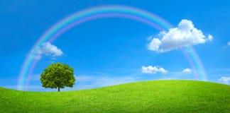 Grünes Feld mit einem großen Baum und einem Regenbogen lizenzfreie stockbilder