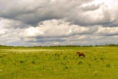 Grünes Feld mit einem Pferd Stockbild