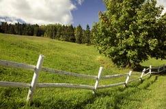Grünes Feld mit einem weißen Zaun Stockfotos