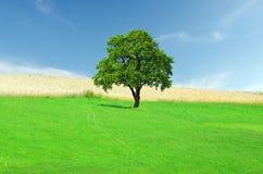 Grünes Feld mit einsamem Baum Lizenzfreie Stockbilder