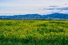 Grünes Feld mit gelben Blumen und Berg Lizenzfreie Stockbilder