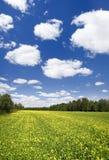 Grünes Feld mit gelber Blume Stockfotos