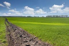 Grünes Feld mit jungem Weizen mit blauem Himmel an Stockfoto