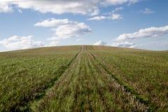 Grünes Feld mit Spuren und blauem bewölktem Himmel Lizenzfreie Stockfotografie