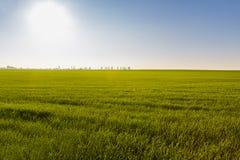 Grünes Feld mit und blauer Himmel Stockfotografie
