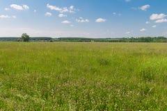 Grünes Feld mit Wald auf dem Horizont Lizenzfreies Stockbild