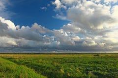 Grünes Feld mit windigen Wolken und blauem Himmel Stockbilder