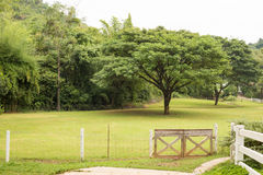 Grünes Feld mit Zaun Stockfotografie