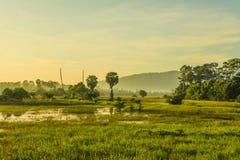 Grünes Feld morgens Lizenzfreies Stockfoto