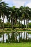 Grünes Feld, Pfund mit Palmen Stockfotografie