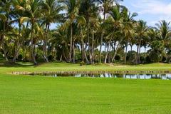 Grünes Feld, Pfund mit Palmen Stockbild