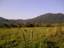 Grünes Feld, reine Natur, Gebirgshorizont Lizenzfreies Stockbild