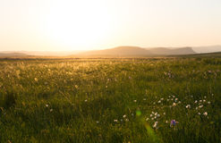 Grünes Feld am Sonnenunterganghimmel lizenzfreies stockbild