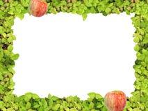 Grünes Feld und Apfel Lizenzfreie Stockbilder