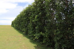 Grünes Feld und Bäume Lizenzfreie Stockfotografie