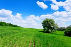 Grünes Feld und Bäume Stockbilder