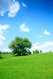 Grünes Feld und Bäume Stockfotos