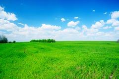 Grünes Feld und Bäume Lizenzfreies Stockfoto