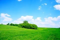 Grünes Feld und Bäume Lizenzfreie Stockbilder