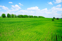 Grünes Feld und Bäume Lizenzfreie Stockfotos