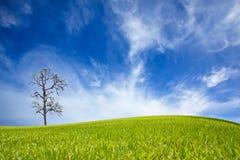 Grünes Feld und Ballon Lizenzfreies Stockbild