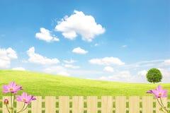 Grünes Feld und Baum, blauer Himmel lizenzfreie stockfotos