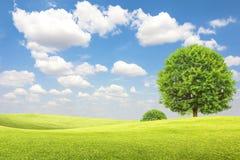 Grünes Feld und Baum mit blauem Himmel und Wolken lizenzfreie stockfotografie