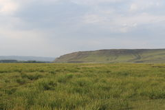 Grünes Feld und Berge Lizenzfreies Stockfoto