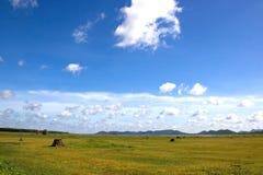 Grünes Feld und blauer Himmel Lizenzfreie Stockfotografie