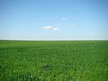 Grünes Feld und blauer Himmel Stockfoto