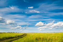 Grünes Feld und blauer Himmel Lizenzfreie Stockbilder