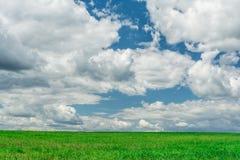 Grünes Feld und blauer Himmel Lizenzfreies Stockfoto