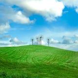 Grünes Feld und blauer Himmel mit Blumenstruktur Lizenzfreie Stockfotos