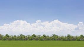 Grünes Feld und blauer Himmel mit großer Wolke Lizenzfreie Stockfotografie