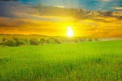 Grünes Feld und blauer Himmel mit hellen Wolken Über dem Horizont ist ein heller Sonnenaufgang lizenzfreies stockfoto