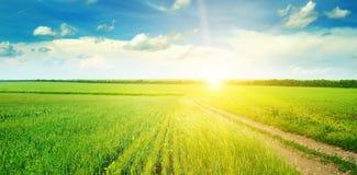 Grünes Feld und blauer Himmel mit hellen Wolken Über dem Horizont ist ein heller Sonnenaufgang Breites Foto stockbild