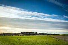 Grünes Feld und blauer Himmel mit seidigen weißen Wolken Lizenzfreie Stockfotos