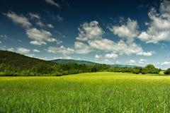 Grünes Feld und blauer Himmel mit Wolken Lizenzfreies Stockbild