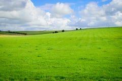 Grünes Feld und blauer Himmel mit Wolkenhintergrund Lizenzfreies Stockbild